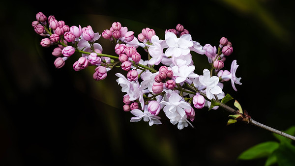 Spring Garden Flowers (Sept/Oct)