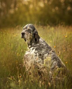 Dog-Kennel-Website-Design.jpeg