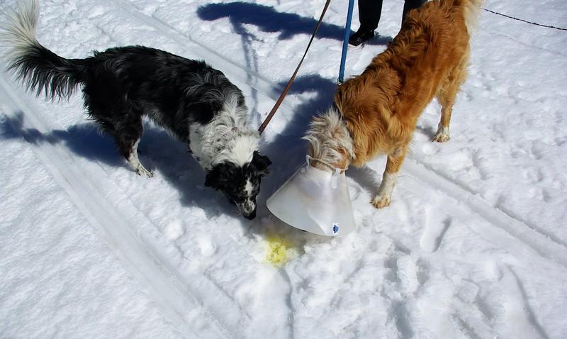 Canine CSI, Carson Pass