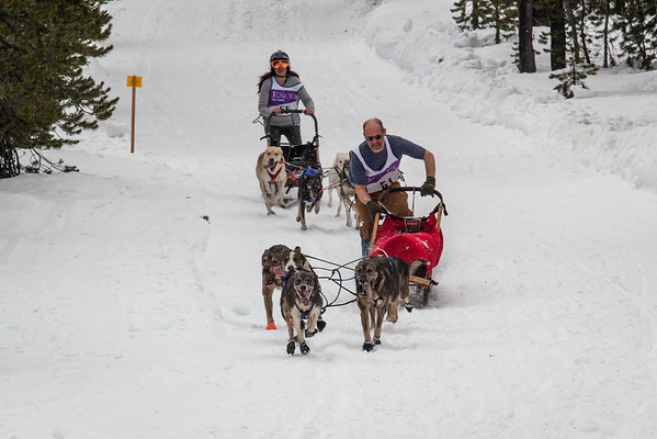 March 6, 2016 (9 dog, 5 dog, Advanced Skijor)