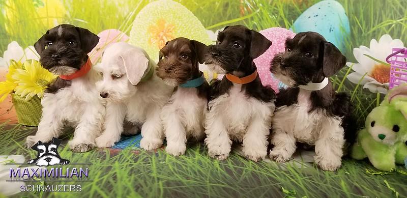 Mystic pups 033.jpg
