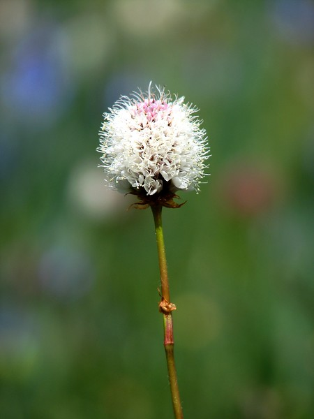 amh FLOWERS (1399).jpg