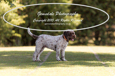 Lagotto Romagnolo Show 19th July 2015