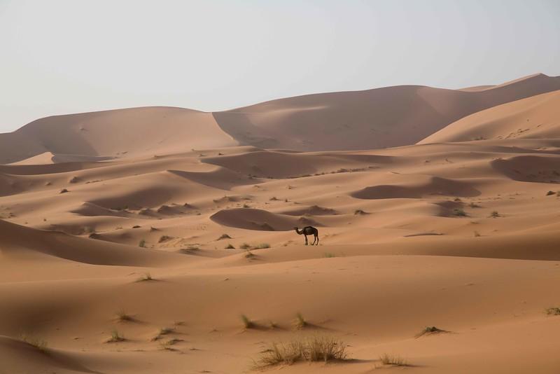 160925-023203-Morocco-0414.jpg