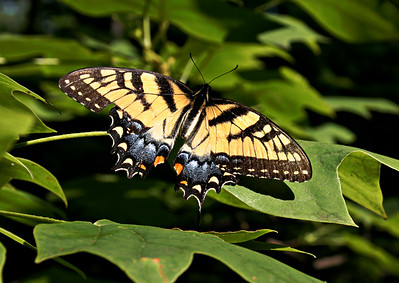 Butterflies, Dragonflies, Bugs