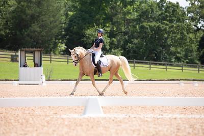 Horse 385