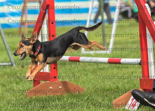 Bromsgrove DTC Saturday Ring 1 Small Agility 1-2 Combined