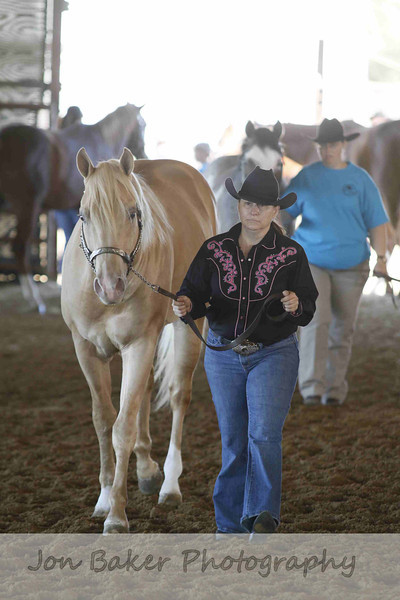 halter_stallion_yearling_pony