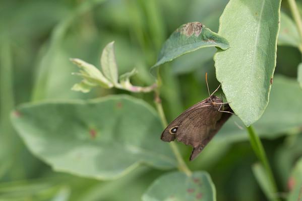 FEIS Butterfly Bustle