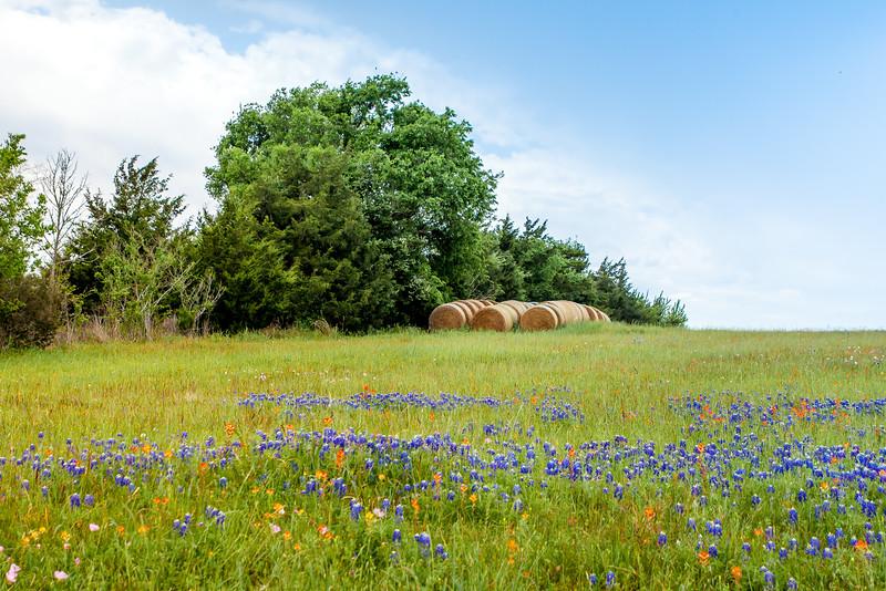 2016_4_9 Texas Wildflower Shoot-8553.jpg
