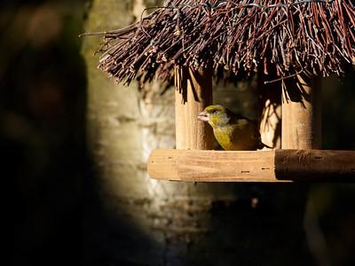 2011-03 Birds in the garden