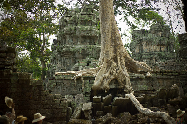 Banyan trees that grow from the crumbling temple walls of the ancient Khmer city Angkor, Cambodia.