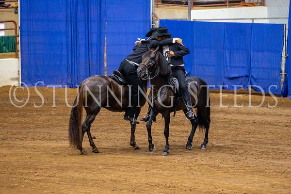 136 Fino Stallions 5 & 6 Years