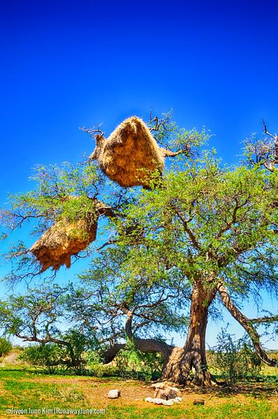 Namibia-bird.jpg