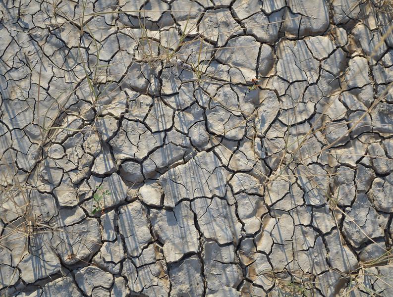 Mudcracks at Badlands National Park