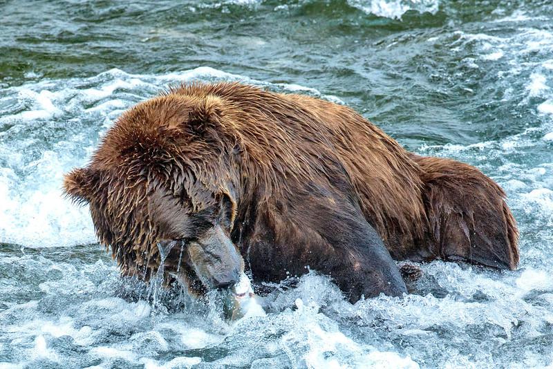 Alaska_2013_FH0T8651.jpg