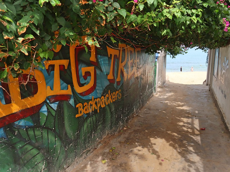 IMG_1287-big-tree-backpackers.jpg