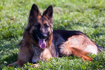 Chanticleer Dog Park