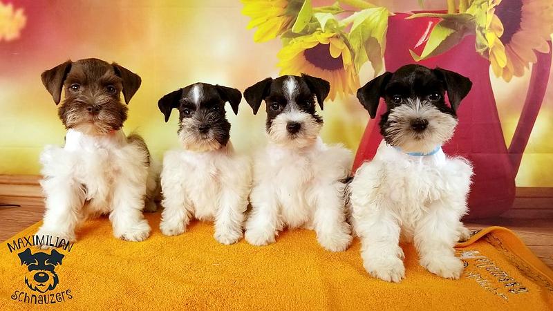 Julie Puppies 012.jpg