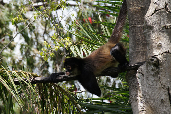 palm beach zoo 5 4 13