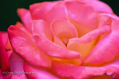 Portland International Rose Test Gardens