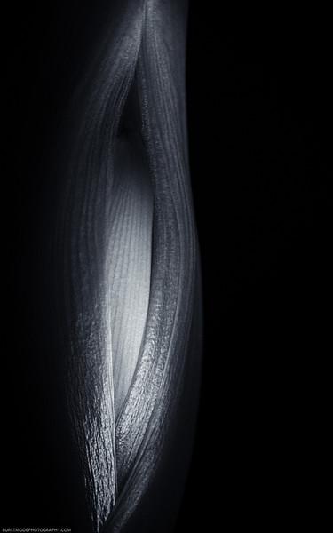 Amaryllis DSC_4788-Edit-1.jpg