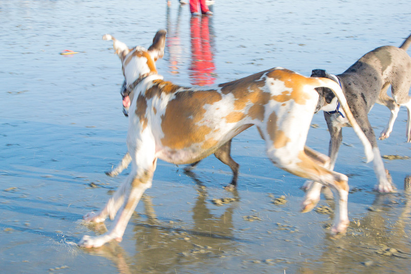 dogs_beach-51.jpg