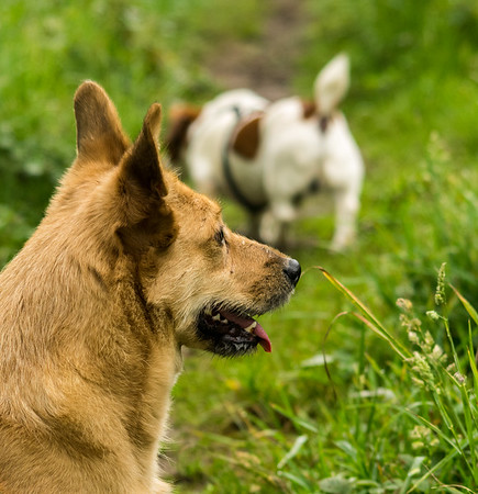 STAPLEFORD DOG WALK (13)