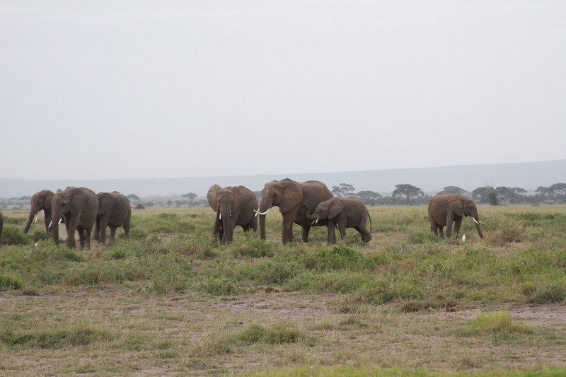 Kenya 2019 #2 416.JPG