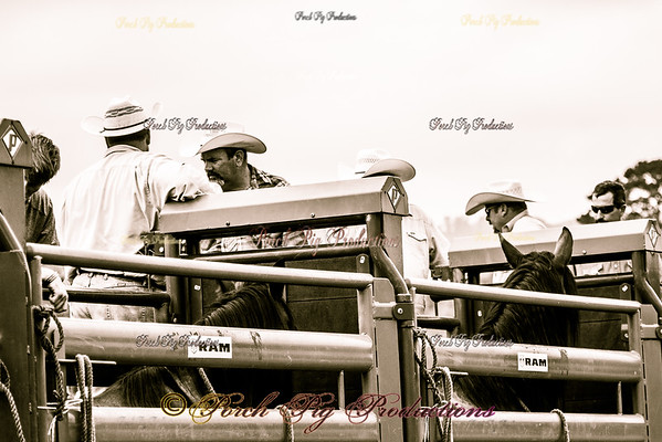 BRONC FANNING National Championship Chuckwagon Races