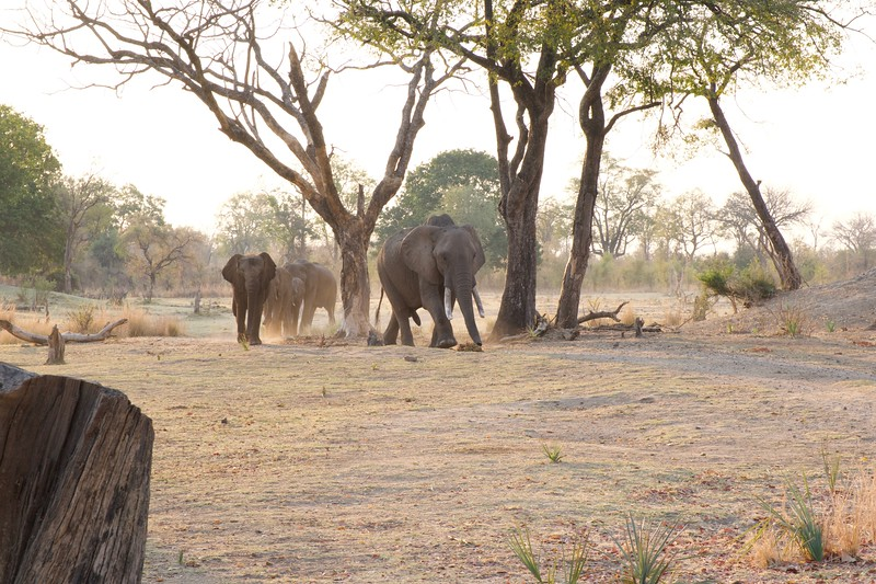 Elephant Cafe, Zambia