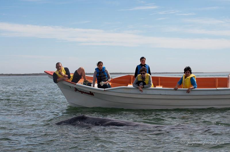 Mexico-Loreto-Whale-2053.jpg