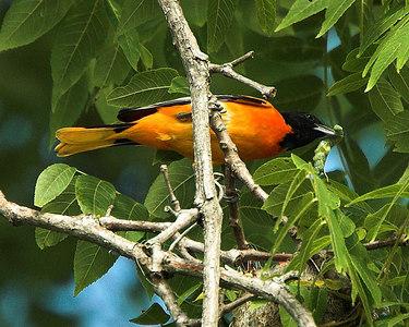 Binder Lake Birds