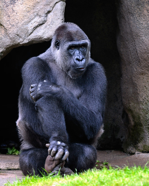 Cincinnati Zoo 5/28/2010