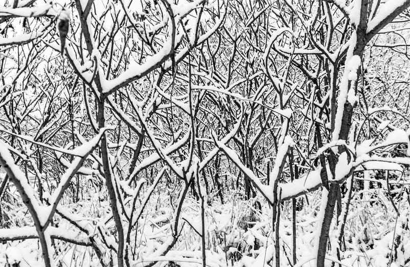 Snow-branches-high-contrast.jpg