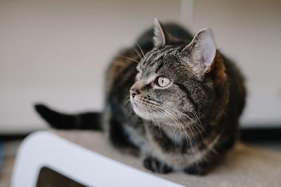 Sheffield Cats Shelter
