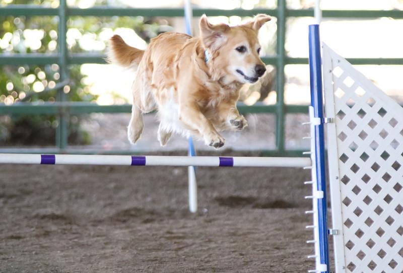 3-15-2015 Bloodhound-1549.jpg