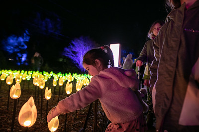 Family - Enchanted Forest of Light