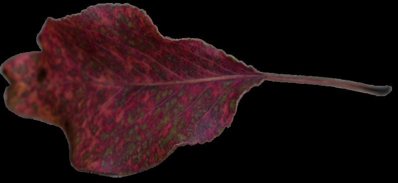 Leaf 47.png