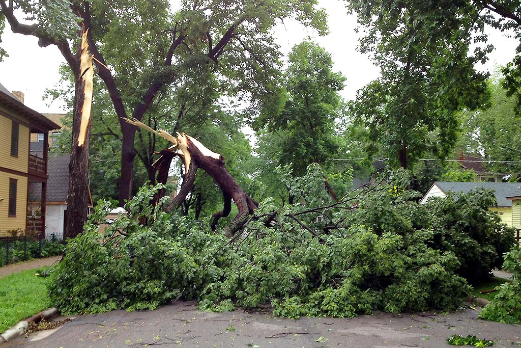. A fallen tree on the corner of Portland Avenue and St. Albans Street North in St. Paul on Saturday, June 22, 2013. (Photo courtesy Davis)