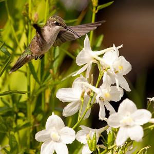 Birds Summer 2009
