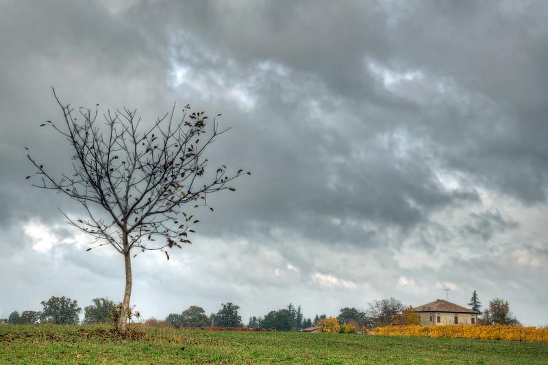 Fall - Fellegara, Scandiano, Reggio Emilia, Italy - November 6, 2011