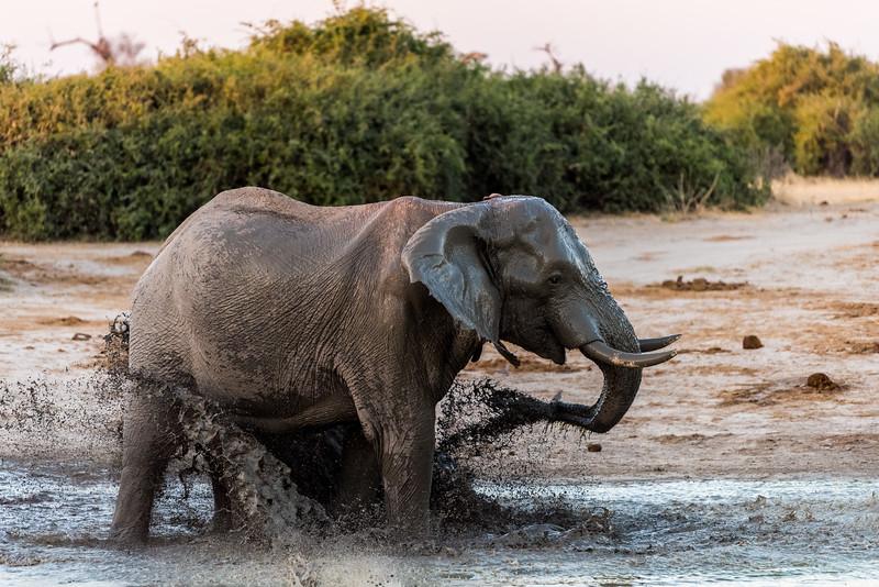 Botswana_June_2017 (4253 of 6179).jpg