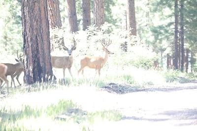 10 Deer Herd