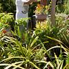 PLANT SALE AT FAMILY SERVICE'S FAIR OAKS ADULT ACTIVITY CENTER