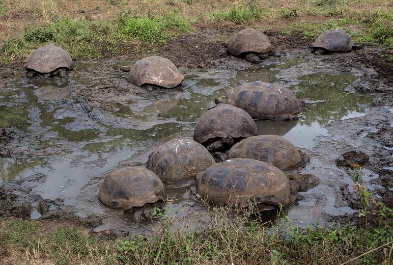 Galapagos_MG_5073.jpg