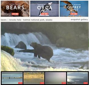 9-10-16 Katmai Bears