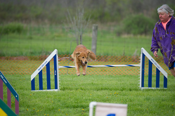 BELLEVILLE AND DISTRICT AGILITY MAY 2019