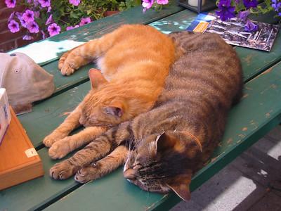 Mix&Match (Cats)