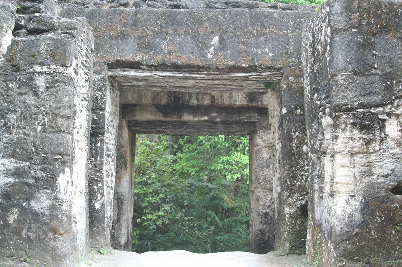 Portal to the jungle